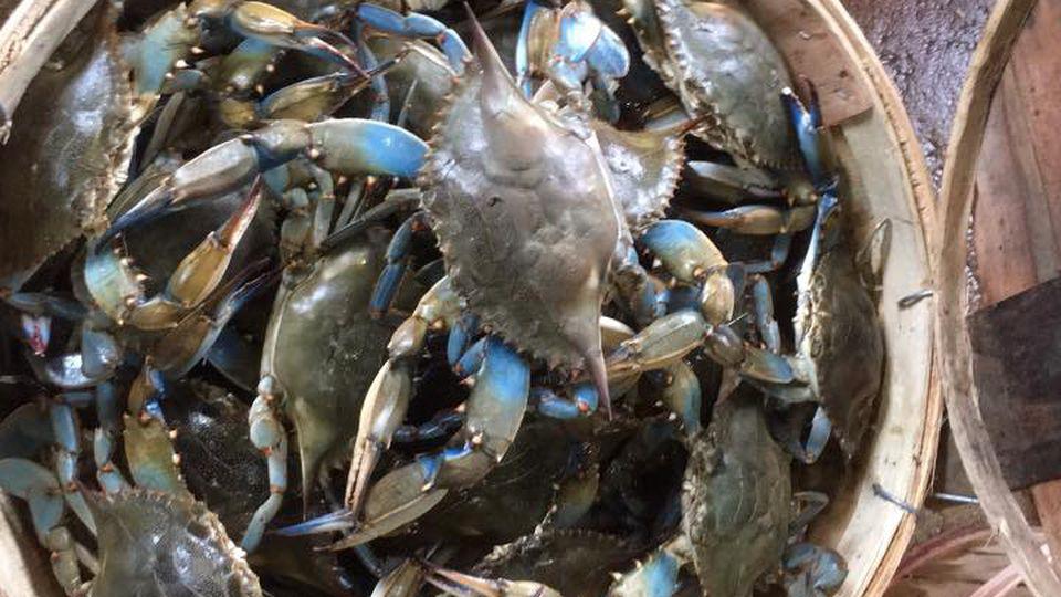 Crosby's Crab Co. VA crabs