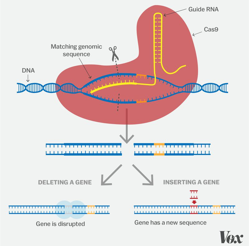 Artboard_1 A simple guide to CRISPR, one of the biggest science stories of the decade