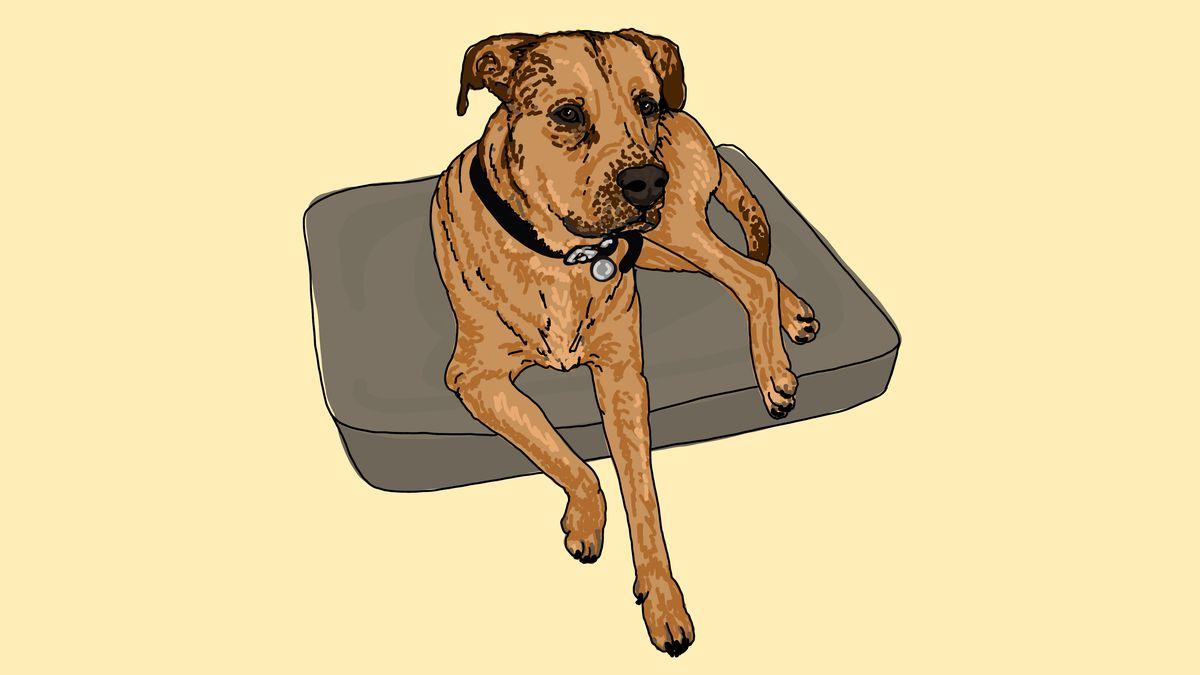 A dog perched on a cushion.