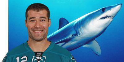 Patrick Marleau Shark