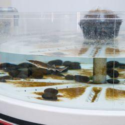 The beluga sturgeon tank, again pets.