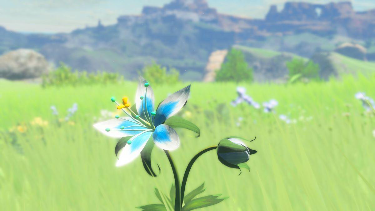 A flower in the fields of Hyrule