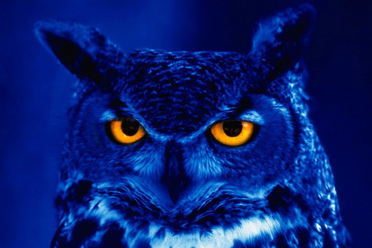 The Oregon St. Night Owls will kickoff against Arizona St. after 7:30 PM on Nov. 16.