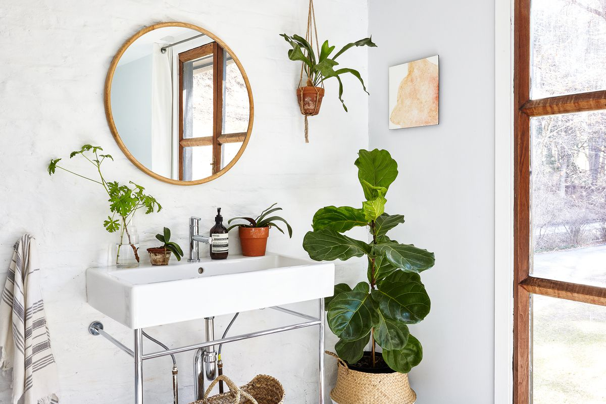 Plant Decor Ideas For The Living Room Bedroom And More Curbed