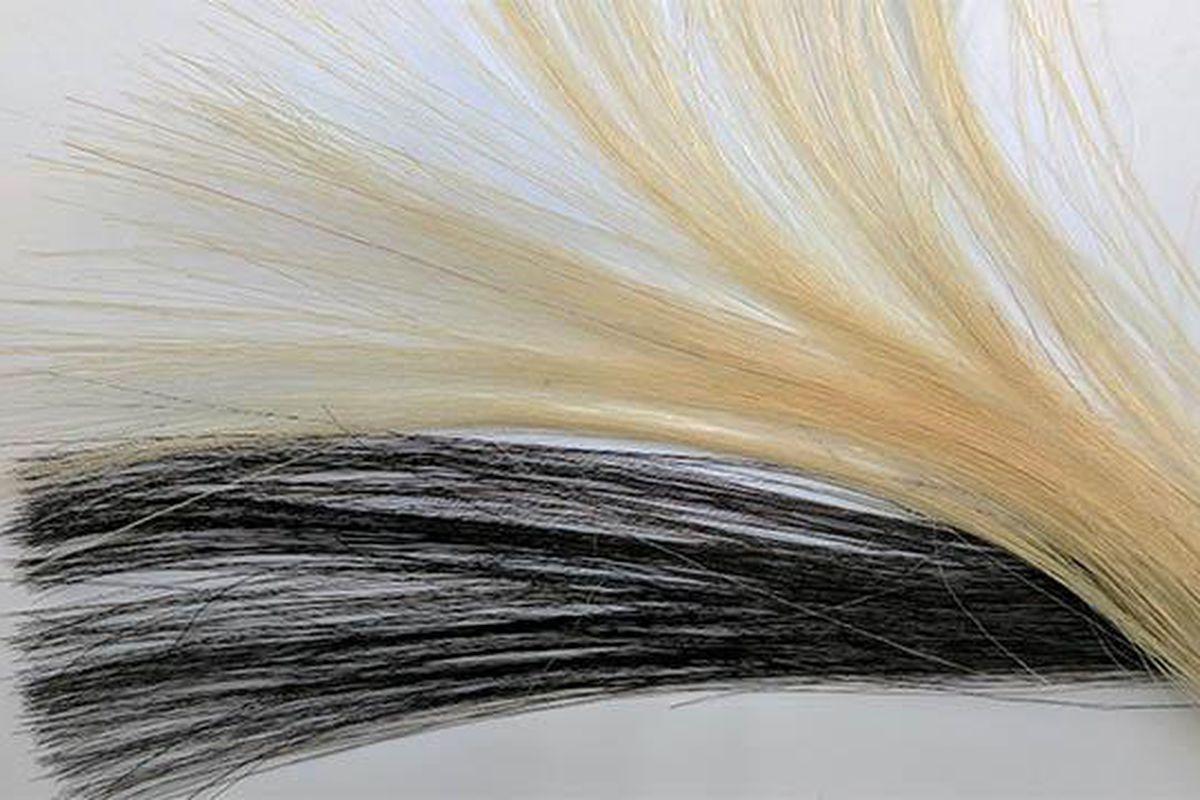 Graphene Hair Dye Nick Poe
