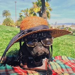 """<b>Trotter</b> (<a href=""""http://www.instagram.com/trotterpup"""">@trotterpup</a>)<br> Trotter, a fashionable Frenchie, lives in San Francisco, and has occasionally been known to dress up for the cameras. Miss Piggy is Trotter's spirit animal, (as you can se"""