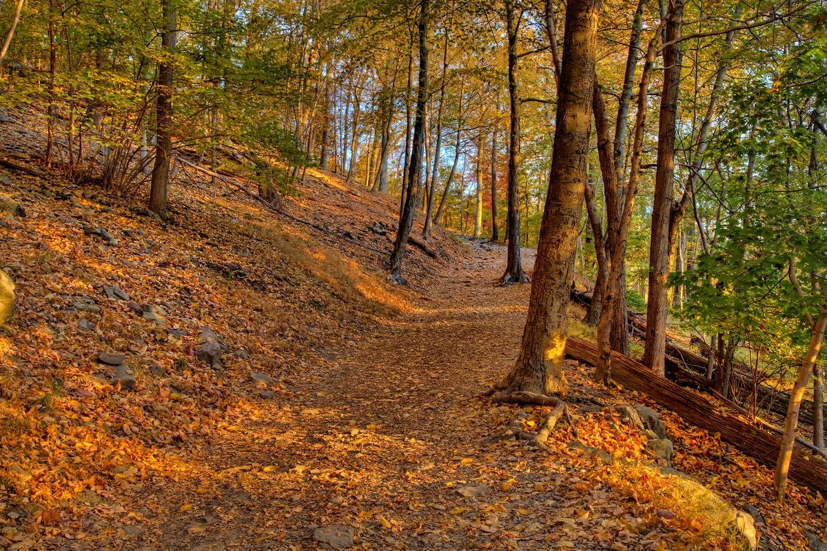 A trail covered in colorful leaves in Harper's Ferry. There are trees along the trail.