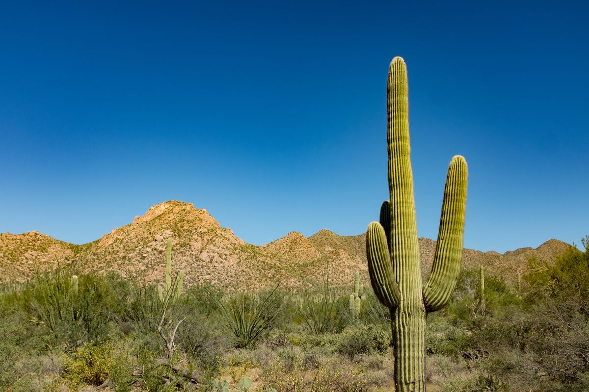 Cactus Cup 2020.Sporting Kc Unveil 2020 Preseason Plans For Arizona The