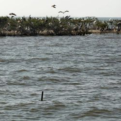 A stake in the water that marked the edge of Cat Island last year, is seen much further from the current eroded shoreline, in Barataria Bay in Plaquemines Parish, La., Wednesday, April 11, 2012.
