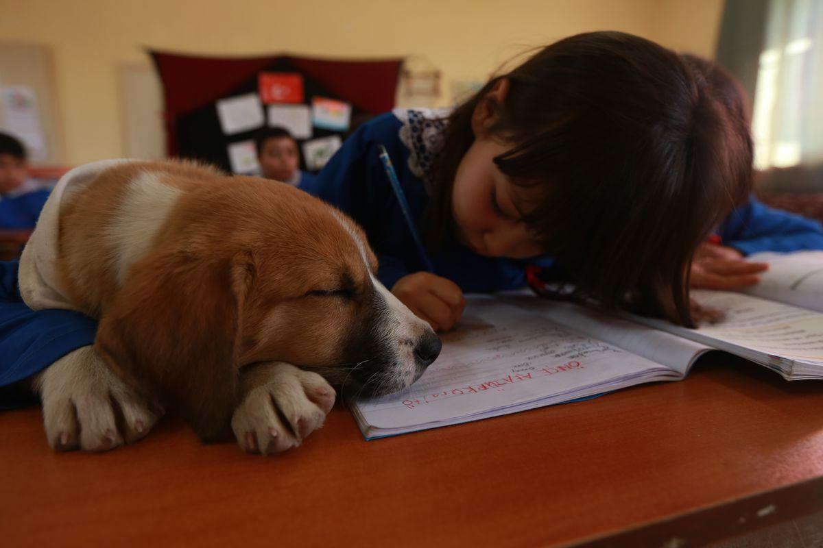 School's mascot dog Findik in Turkey's Tokat