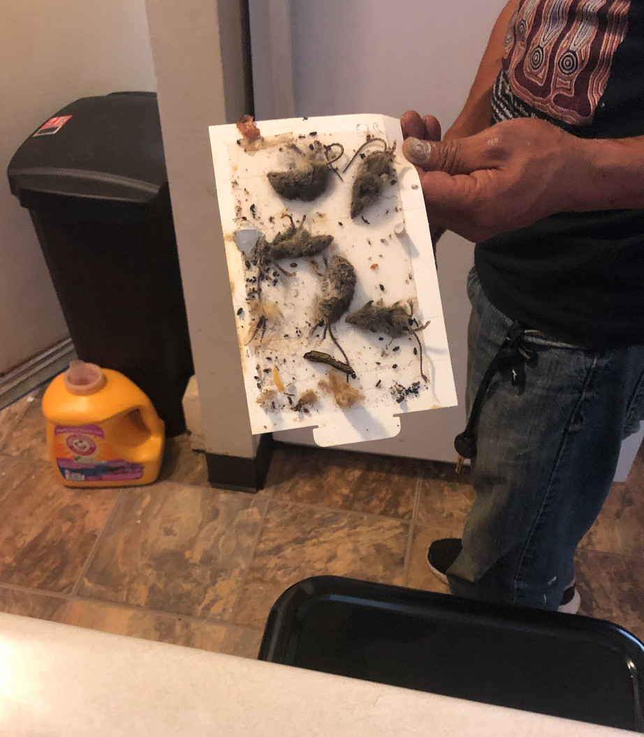 Danaree Miggins alleges this photo of multiple dead rodents was taken in her unit at Concordia Place Apartments on the Far South Side.