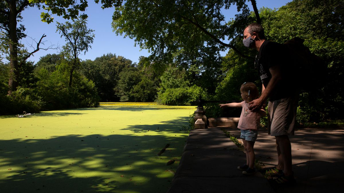 """Rich Gershberg, who was taking a walk with his 3-year-old daughter, Avery, said duckweed in Prospect Park's Lake was the """"worst I've ever seen it,"""" July 21, 2020."""