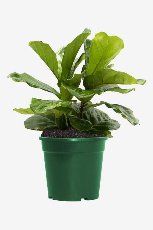 Green planter holds leafy plant.