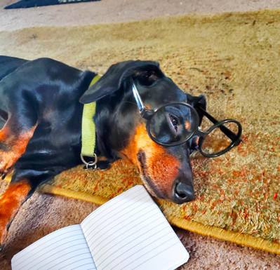 Jordan's wiener dog Oscar sometimes joins virtual classes to help boost her students' spirits.