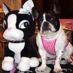 "Rebecca Bonbon with another fashionable French Bulldog. Image via <a href=""http://www.usarebeccabonbon.com/"" rel=""nofollow"">Rebecca Bonbon</a>"