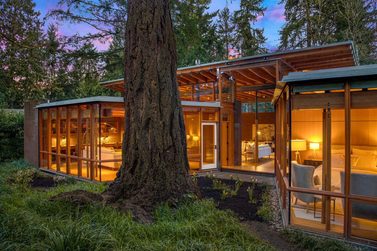 A large tree sits next to a contemporary house made of glass and timber.