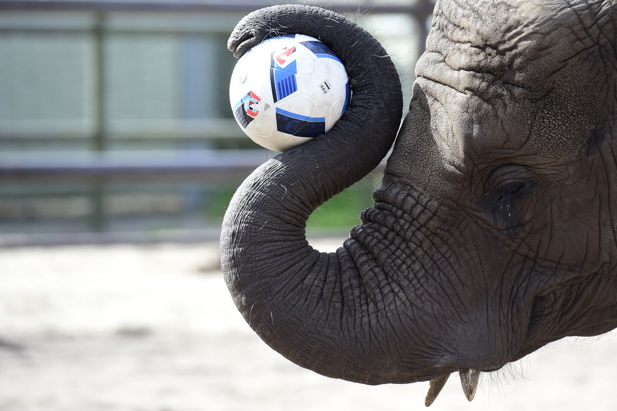 Elephant Nelly To Predict Matches Of Germany At UEFA Euro 2016