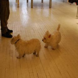 2 of the 3 Westies at TG170