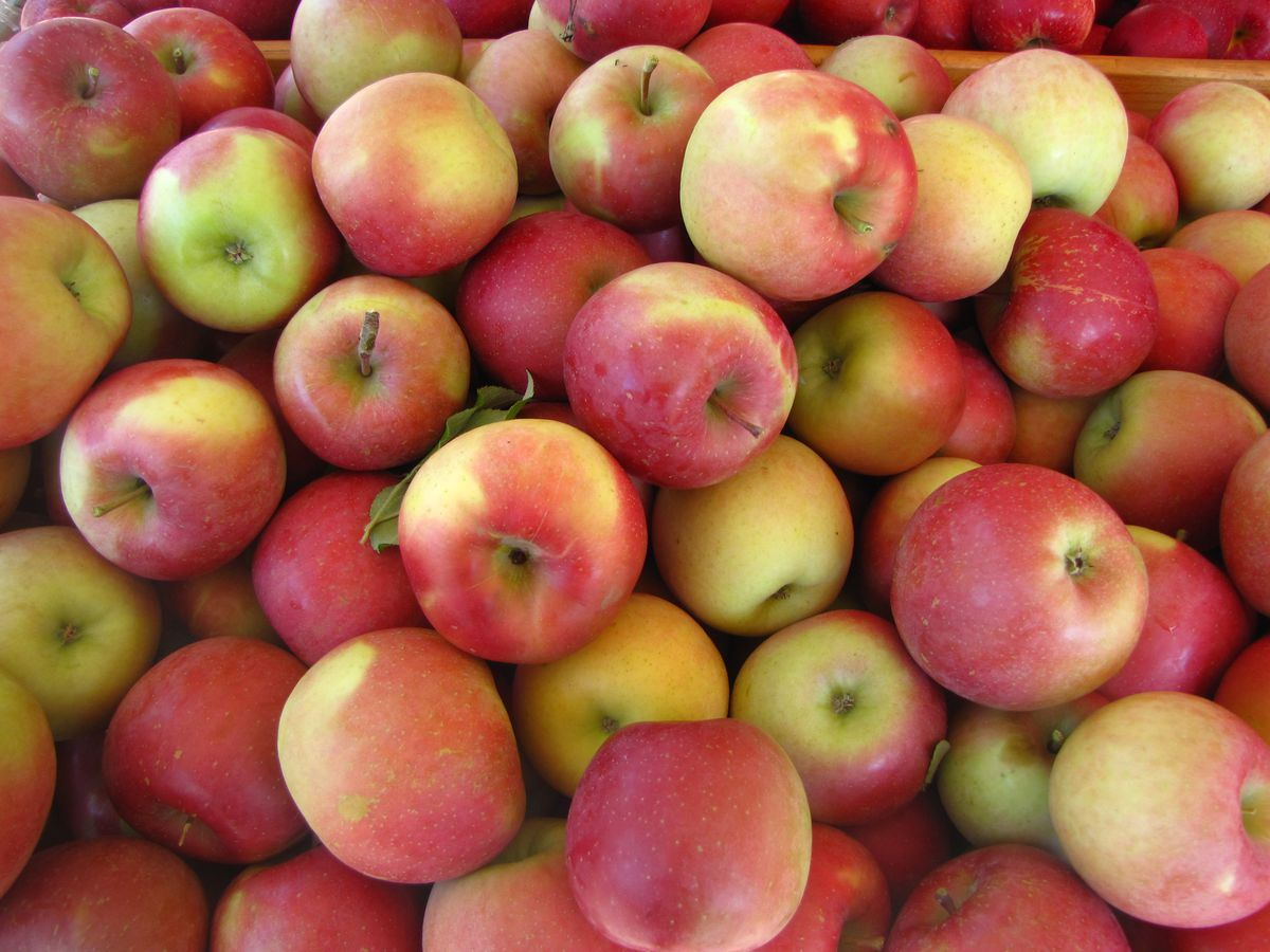 A pile of red apples.