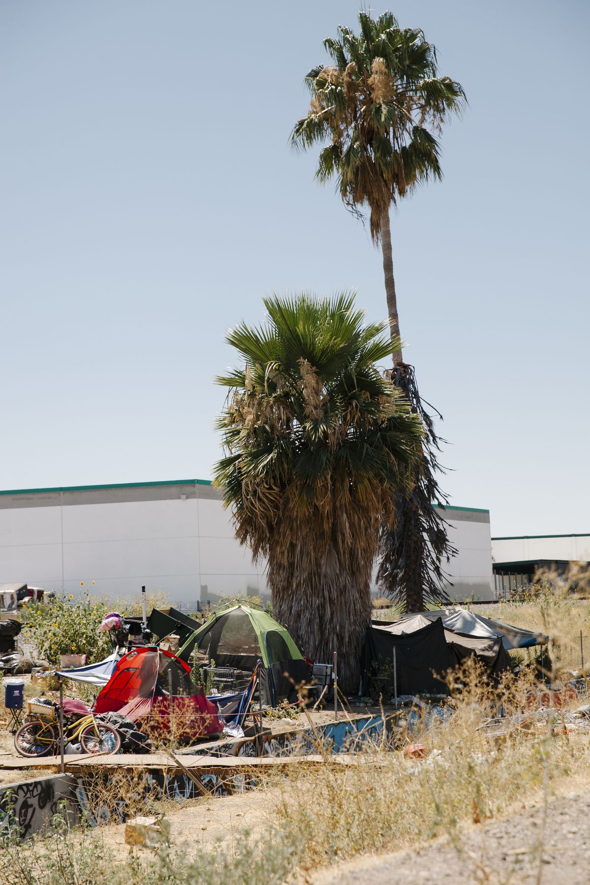 Red and green tents are pitched next to a pair of large palm trees. Warehouses are visible in the background.