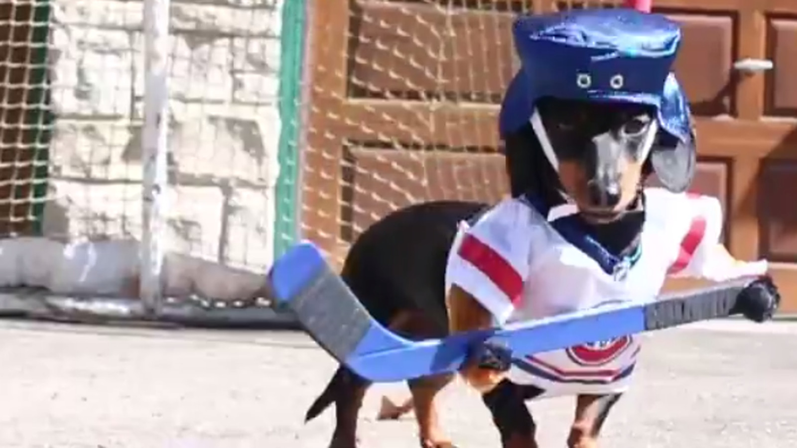 Yes, attaching little hockey uniforms to wiener dogs does ... Rams New Uniforms