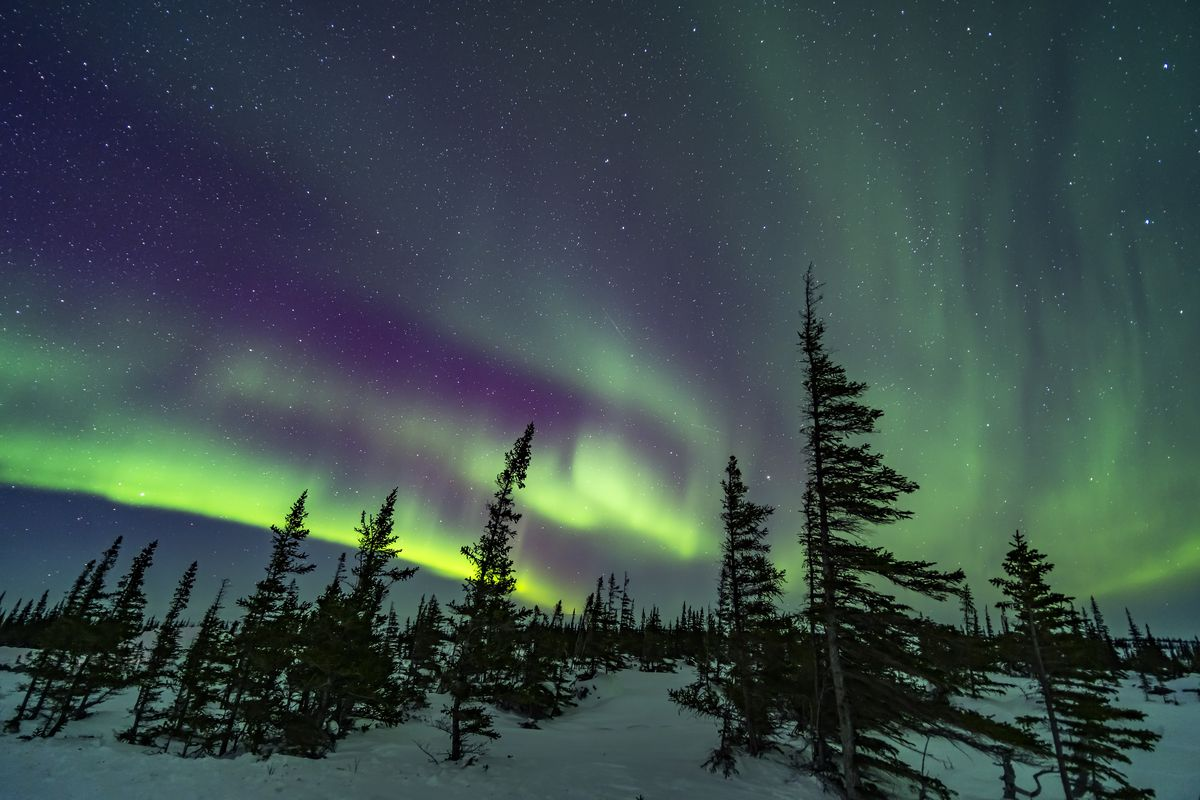 A colourful aurora over the wind-shaped trees of the boreal sub-Arctic forest at the Churchill Northern Studies Centre, March 18, 2020. Arcturus is rising between the two trees right of centre. This is a single 15-second exposure at f/2 with the Venus O