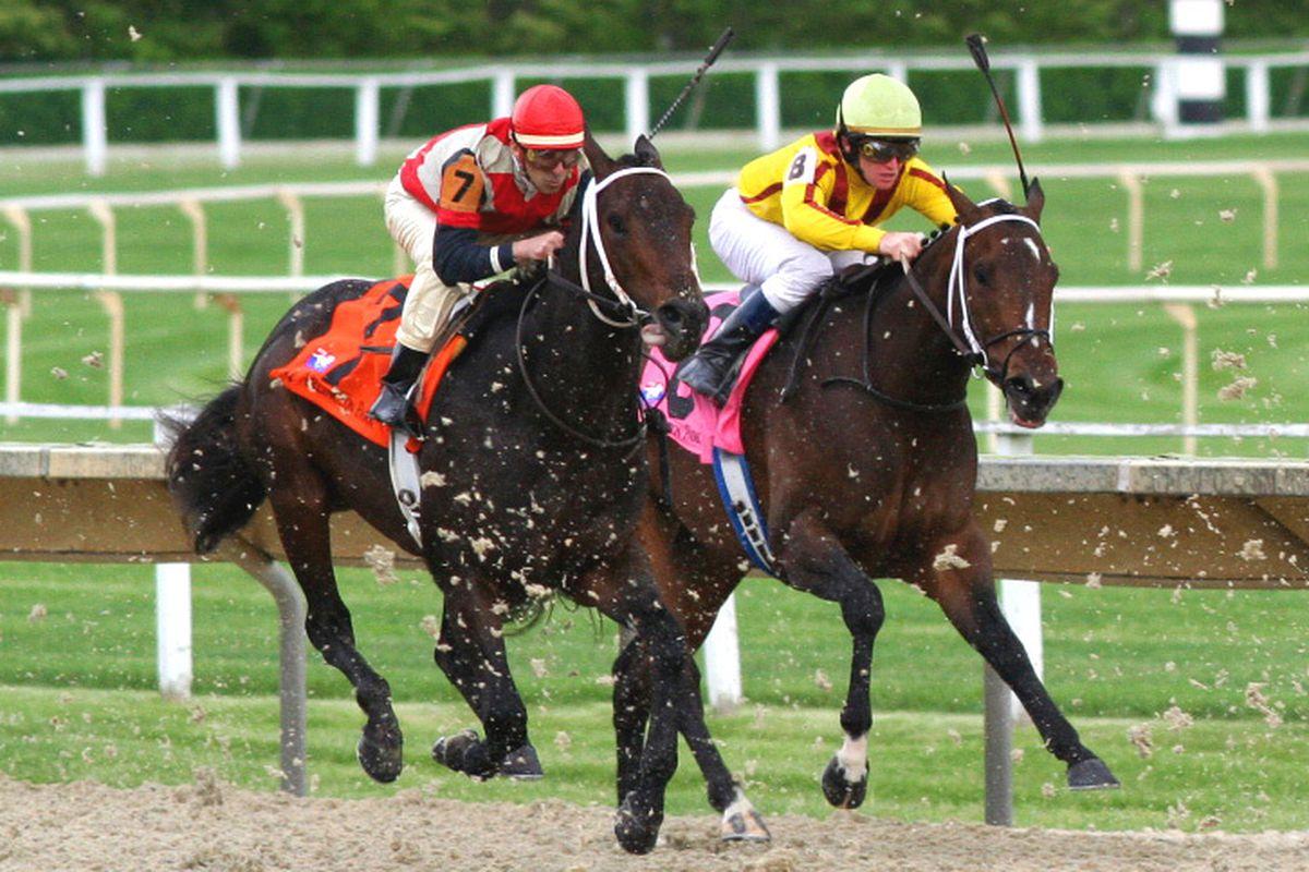 horse race (wikimedia)