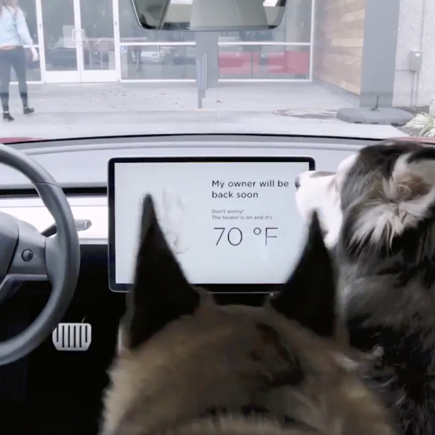 Tesla owner discovers problem with 'Dog Mode' air
