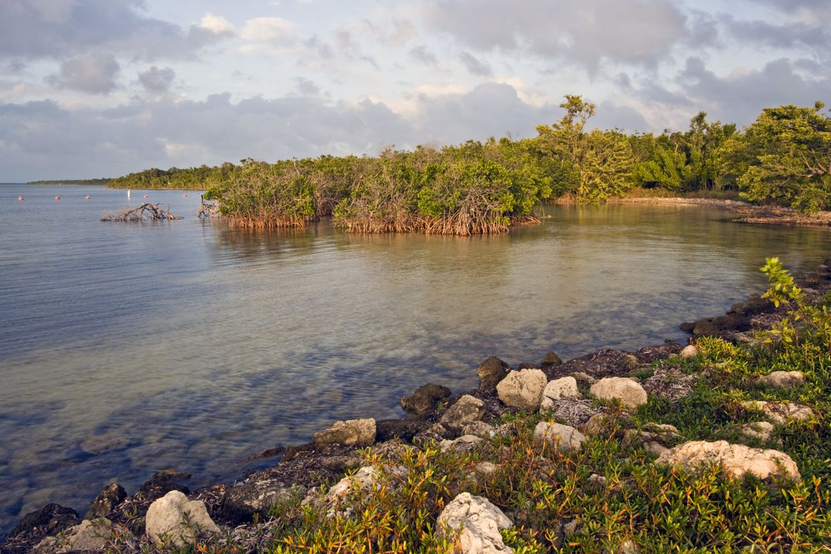 The ocean and mangrove trees at sunset.
