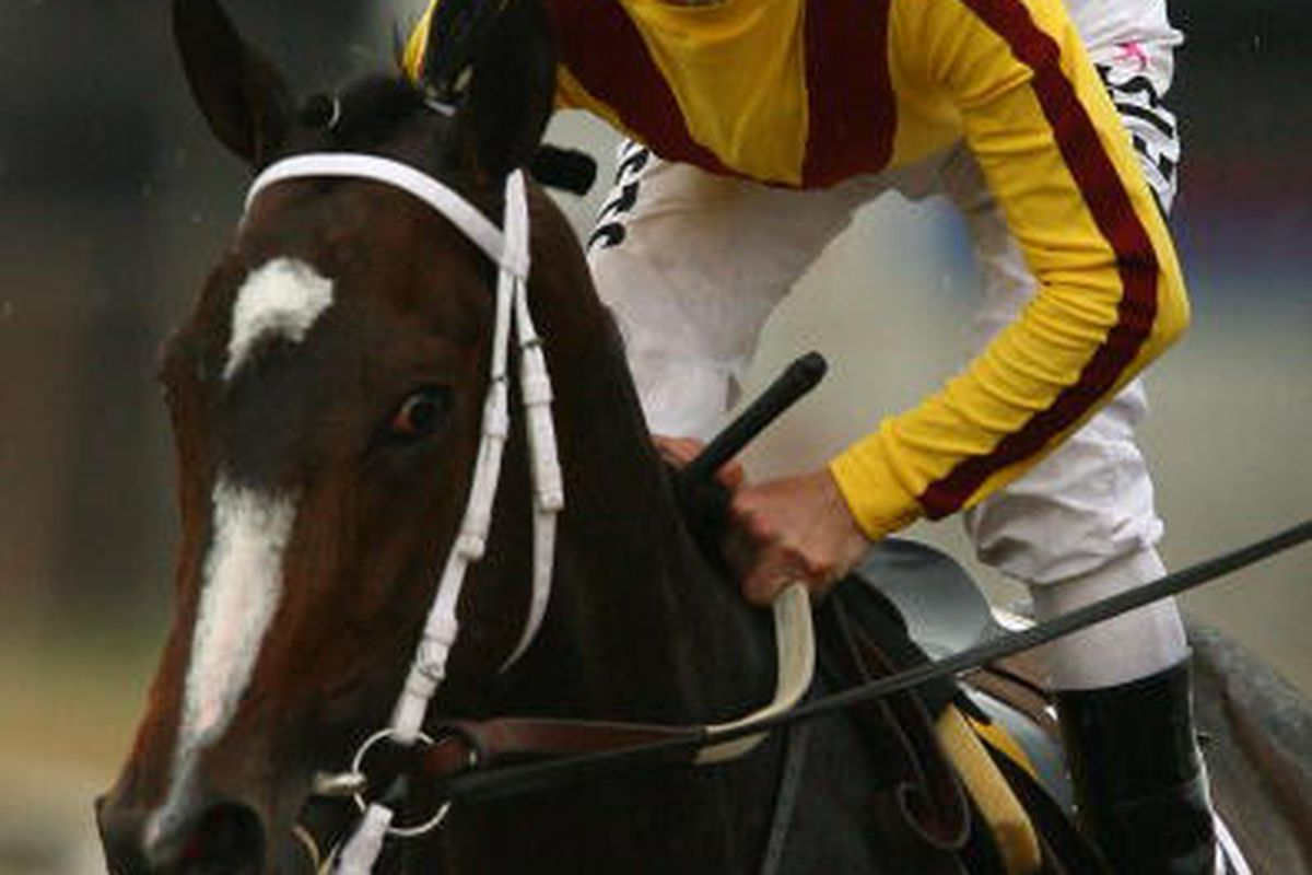 BALTIMORE - MAY 16: Jockey Calvin Borel rides Rachel Alexandra to the winners circle after winning the 134th Running of the Preakness Stakes at Pimlico Race Course on May 16, 2009 in Baltimore, Maryland. (Photo by Al Bello/Getty Images)