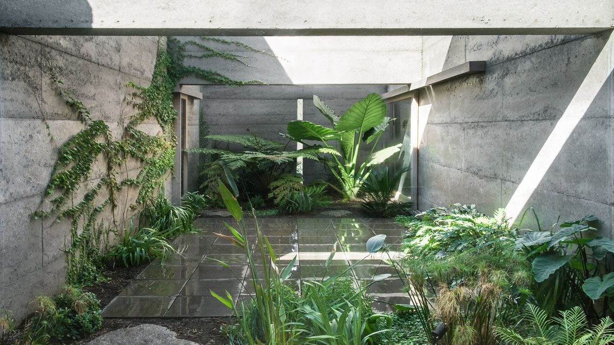 Courtyard with plants and light