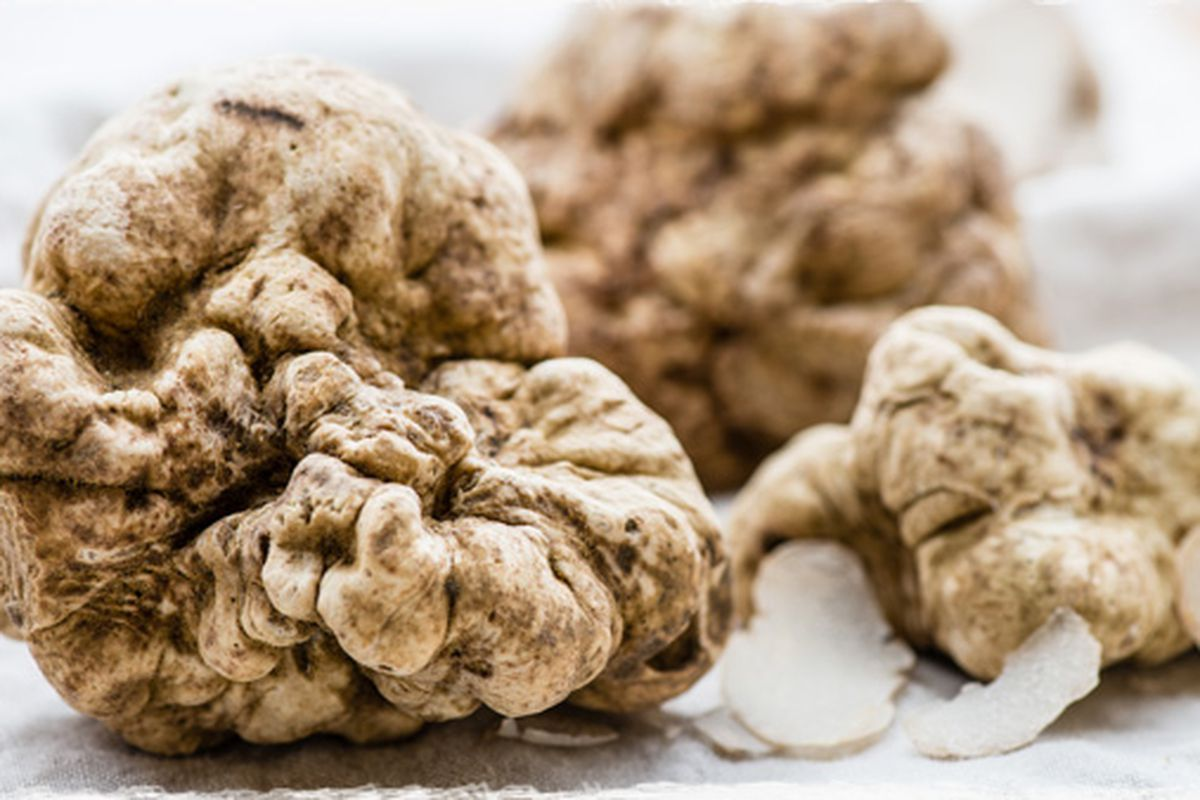 Where To Find Glorious White Truffles This Season In Los Angeles