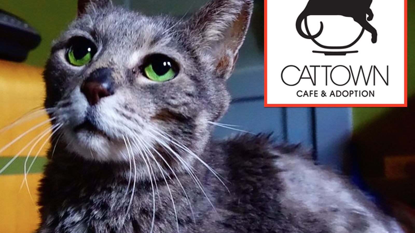 Oakland S Cat Cafe Cat Town Cafe Snags A Location Eater Sf