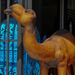 The giant camel that will lure you in...