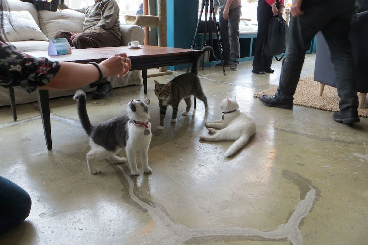 Purina One's cat cafe in NYC.