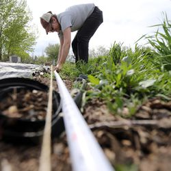 Susan Finlayson, program director for Wasatch Community Gardens, measures out plots at the Rose Park Community Garden in Salt Lake City on Monday, April 17, 2017.
