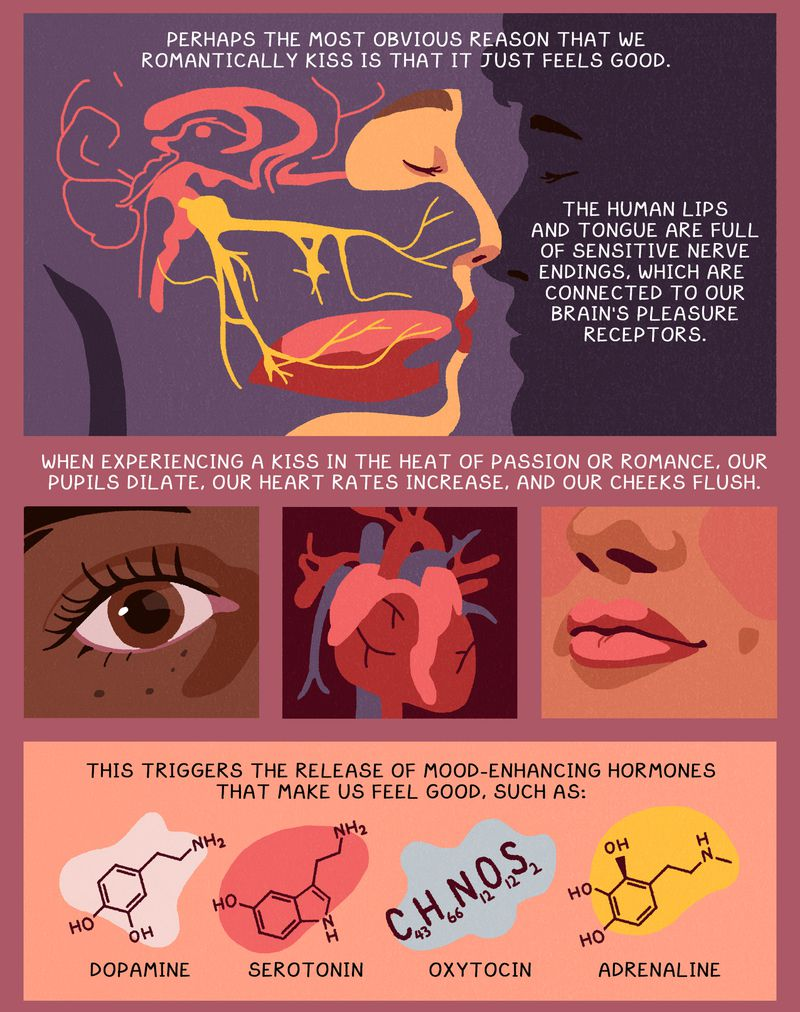 The human lips and tongue are full of sensitive nerve endings, which are connected to our brains' pleasure receptors. When we kiss, our pupils dilate, our heart rates increase, and dopamine, serotonin, oxytocin, and adrenaline are released.
