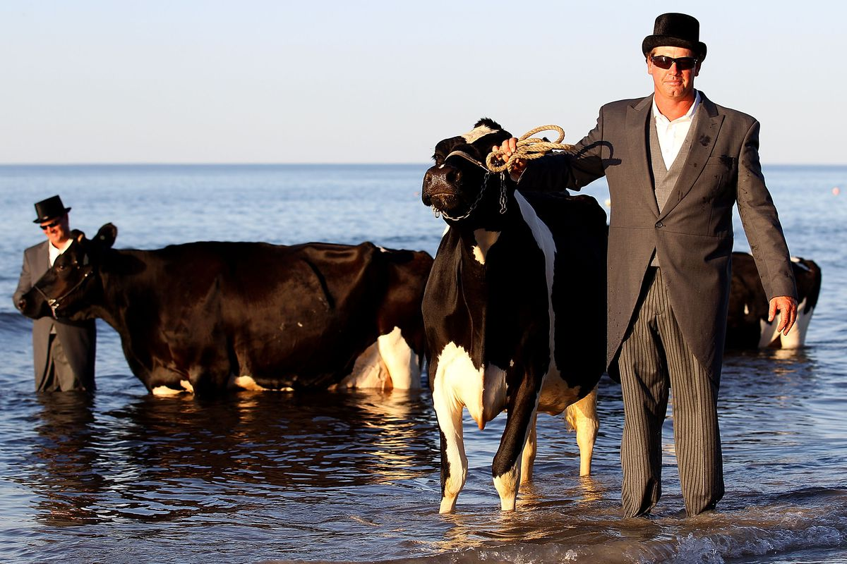 Nothing to sea here. Mooove along.