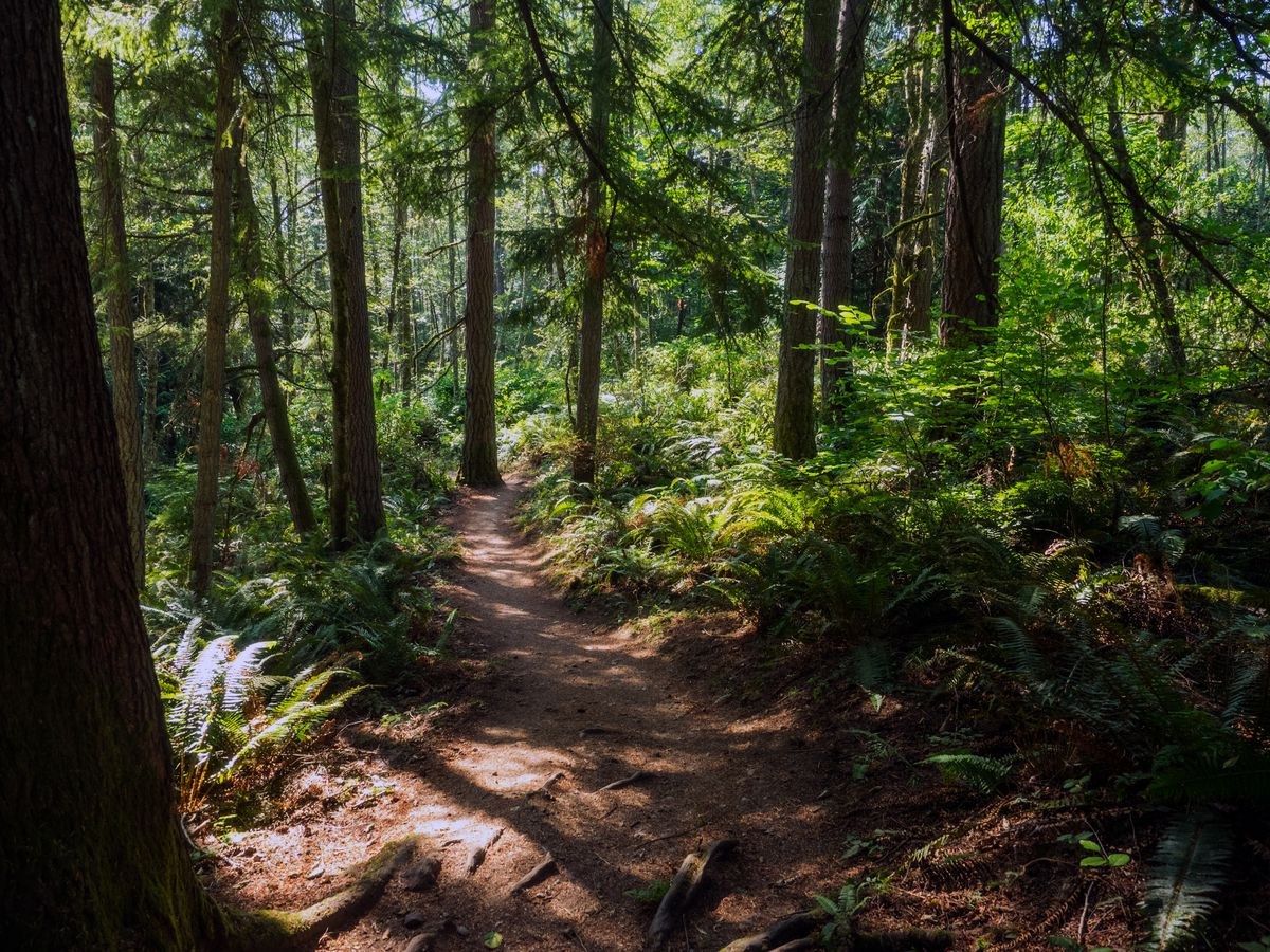 11 transit-accessible hikes in and around Seattle - Curbed Seattle