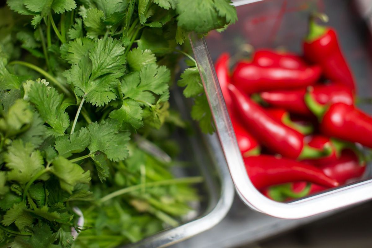 Cilantro and jalapeño peppers will add a jolt of color and flavor to Forage recipes.