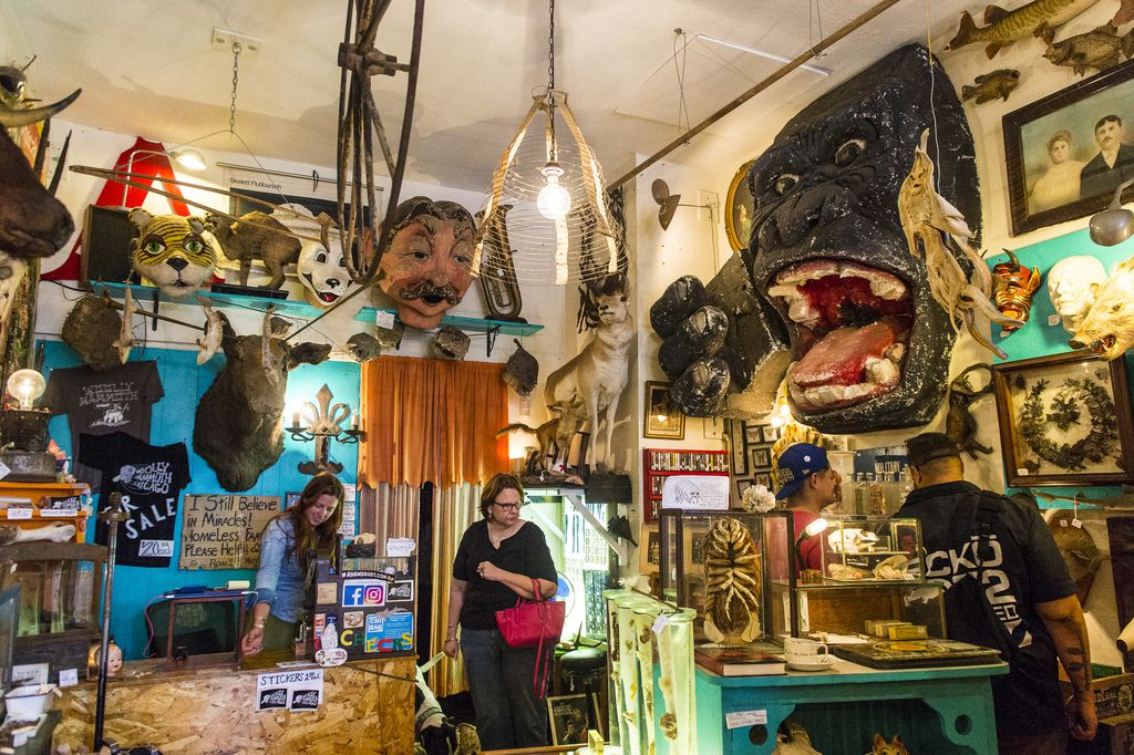 Shoppers browse oddities inside Woolly Mammoth in Andersonville. | Tyler LaRiviere/Sun-Times