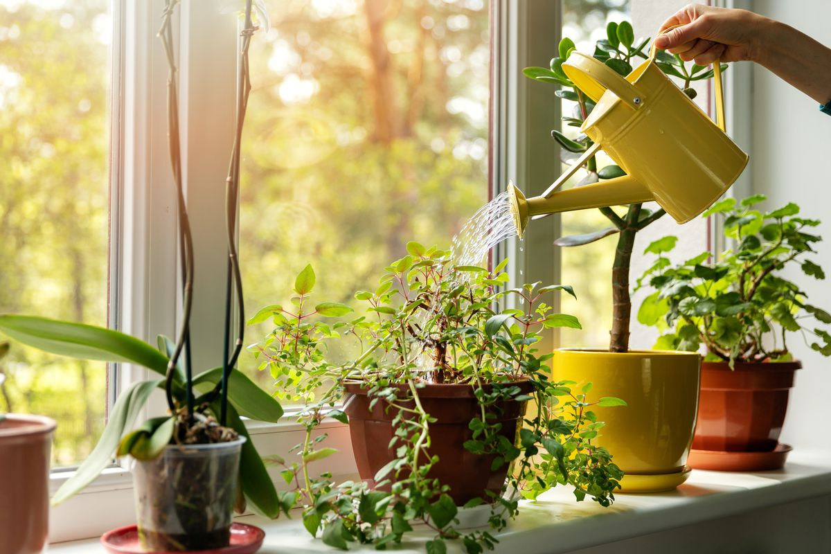 Staying at home during the coronavirus pandemic means there's a lot more time to create an indoor garden, or get seedlings started for outdoor planting later this spring/summer.