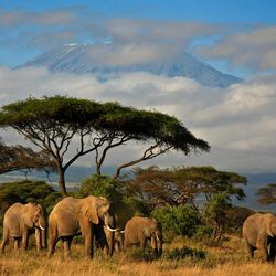 In East Africa, native tour guides have formed an organization that is transforming the future of African wildlife and Kenyan safari travel.