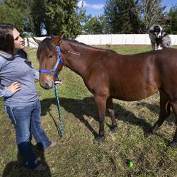 Jaylee Rasmussen is pictured with her mustang, Montana, and 6-week-old puppy near her home in West Haven, Weber County, on Wednesday, Oct. 2, 2019. The Bureau of Land Management and Utah 4-H have partnered for the Youth and Military Mustang Trail Challenge where youth and veterans choose a wild mustang and have approximately 100 days to turn it into a gentle, adoptable equine companion. Because no one made a bid on Montana, Rasmussen bought her for $25, which was the minimum bid.