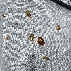 Bed bugs crawling all over Salt Lake - Deseret News