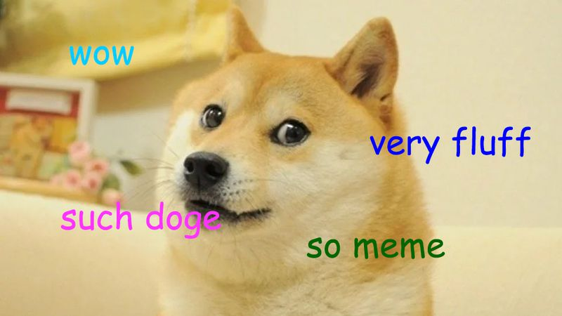 """Image of doge meme saying """"wow,"""" """"very fluff,"""" """"such doge,"""" and """"so meme"""""""