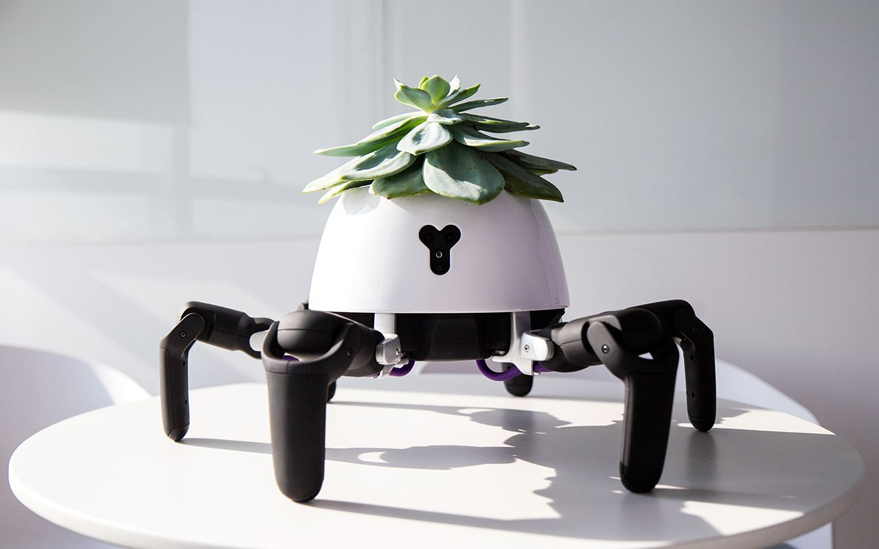 This sun-chasing robot looks after the plant on its head