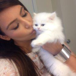 """Kisses kitty"""