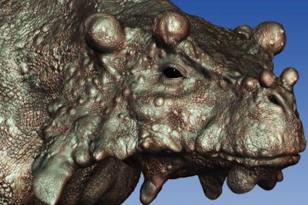 Bumpy reptile, Bunostegos akokanensis (Credit: Marc Boulay/University of Washington)