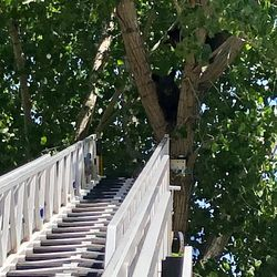 A mother bear and two cubs were removed from a tree by wildlife managementin an orchardnear Moab on Friday, Aug. 23, 2019.